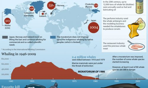Whaling Industry Timeline