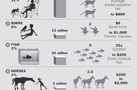 top-10-pets-infographics