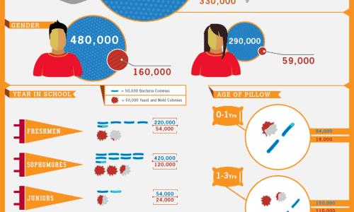 infographic-college-bedding-study