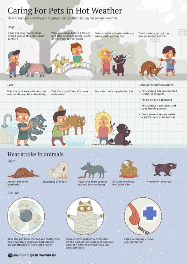 Caring For Your Pets In Hot Weather