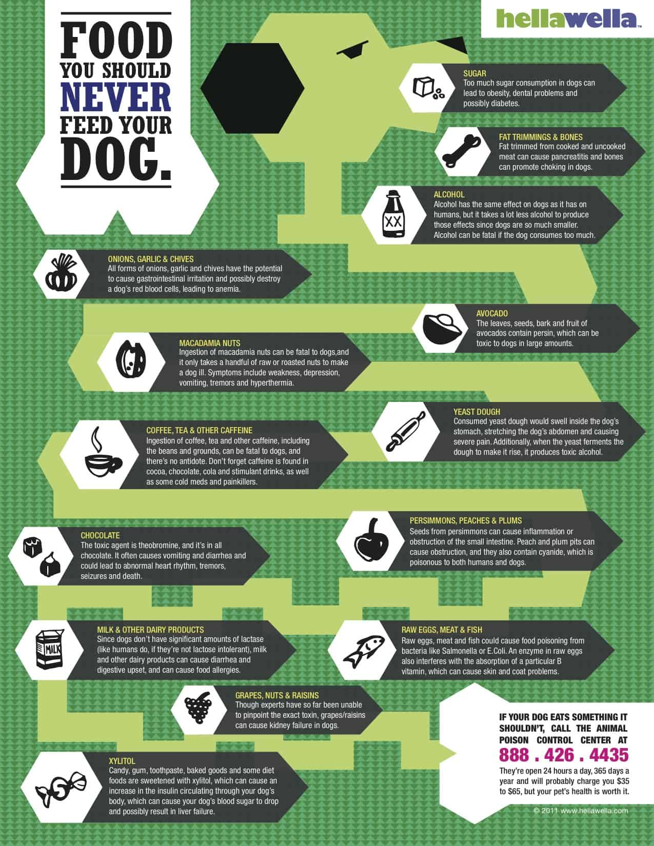 What Not To Feed Your Dog Infographic Daily Infographic