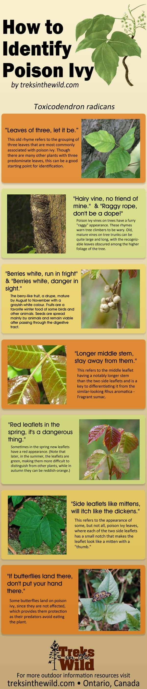 How to Identify Poison Ivy Infographic