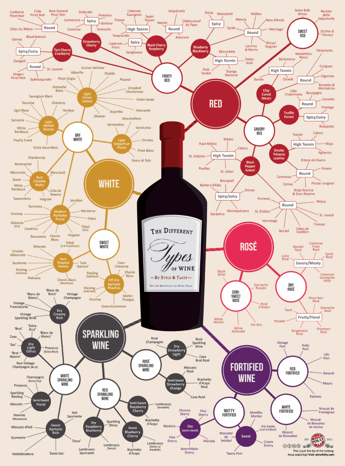 The Different Types Of Wine Infographic