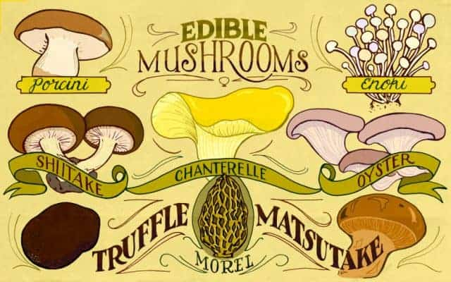 ediblemushrooms1920x1200-640x400