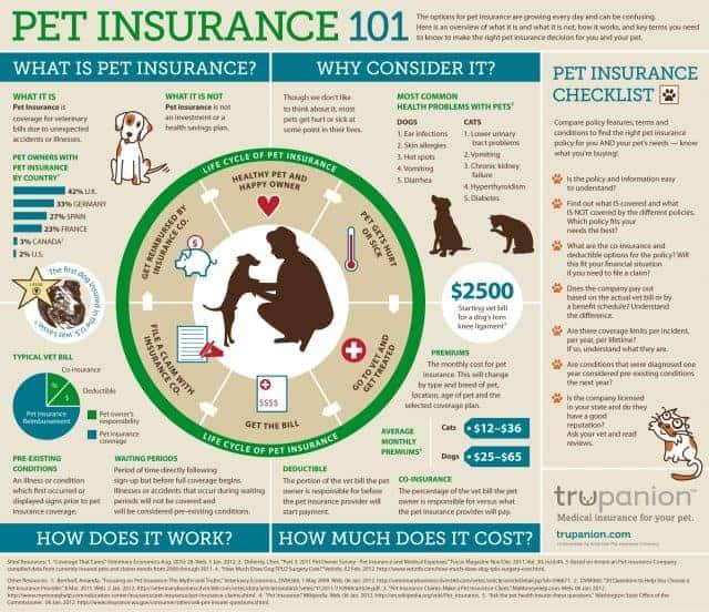 petinsurance101-1024x8841-640x552