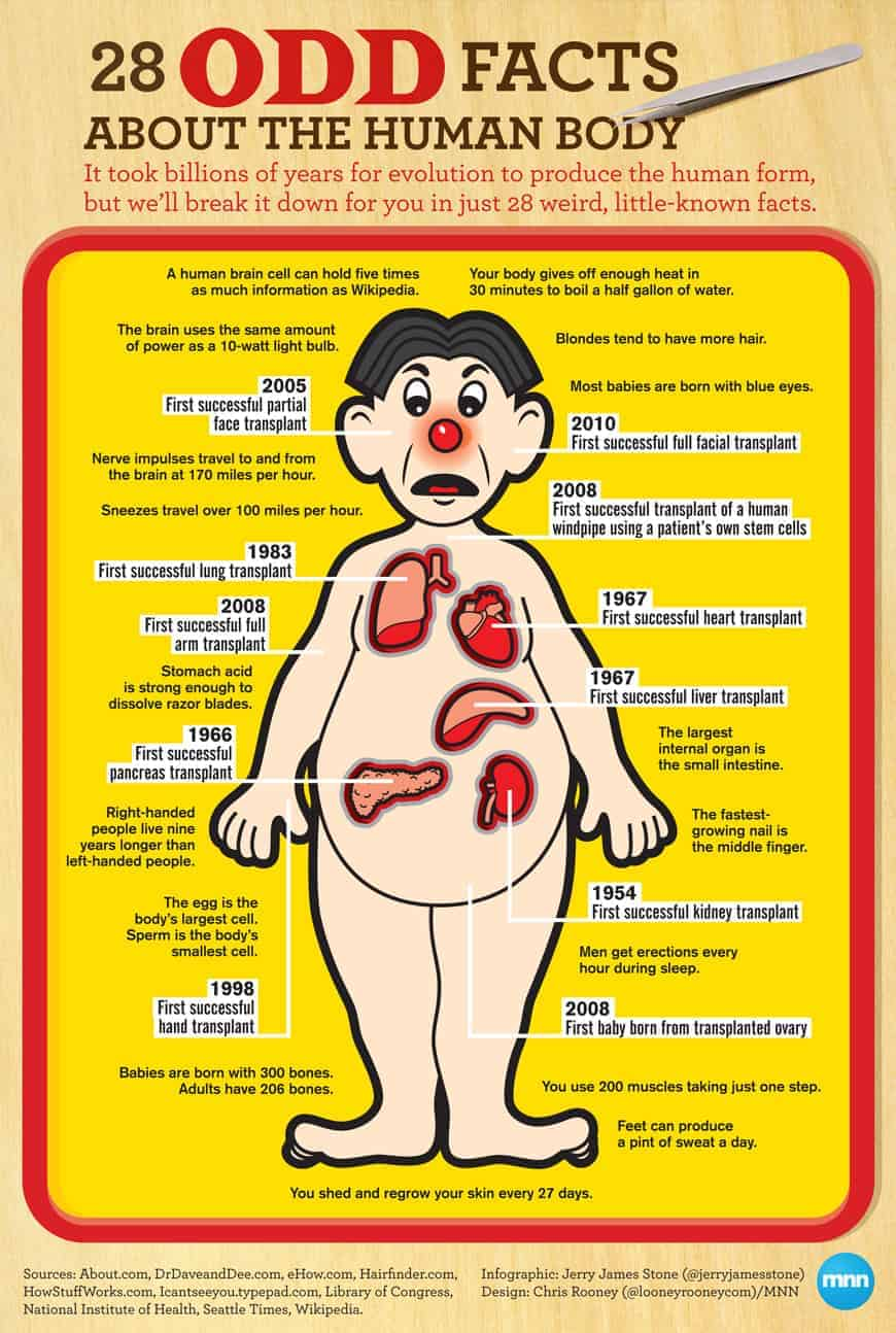 28 Odd Facts About The Human Body Daily Infographic