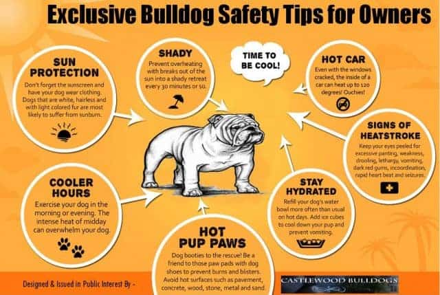 exclusive-bulldog-safety-tips-for-owners_53c3c73c6b93a_w1500-640x429