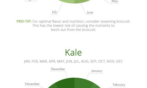 Vegetables Season Infographic