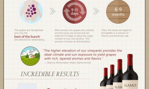 Malbec Wine Enthusiast Infographic