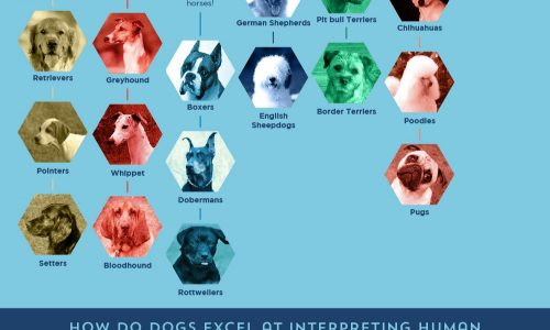 Evolution of the Dog Infographic