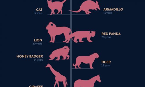 Life Spans of the Animal Kingdom Infographic