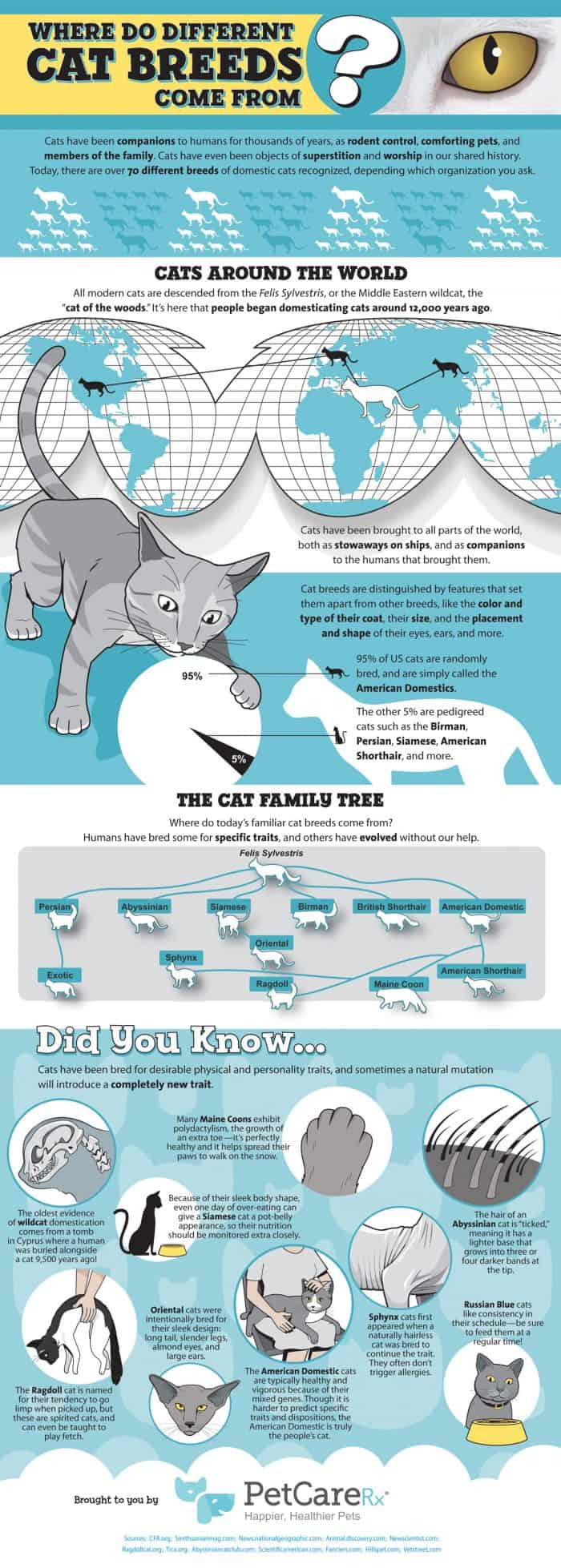 Cat Breed Infographic