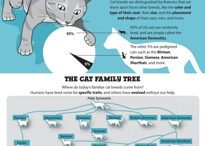 Cat_Breed_Infographic_PetCareRx_Full