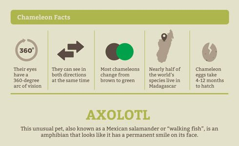 Unusual Facts about Unusual Pets