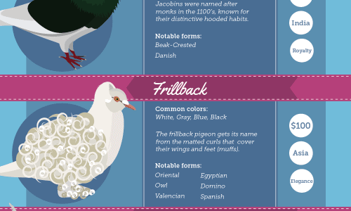Incredible Pigeon Infographic