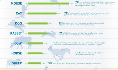 how-does-an-animals-hearing-compare-to-a-humans-infographic_568a7a149d0fe_w1500