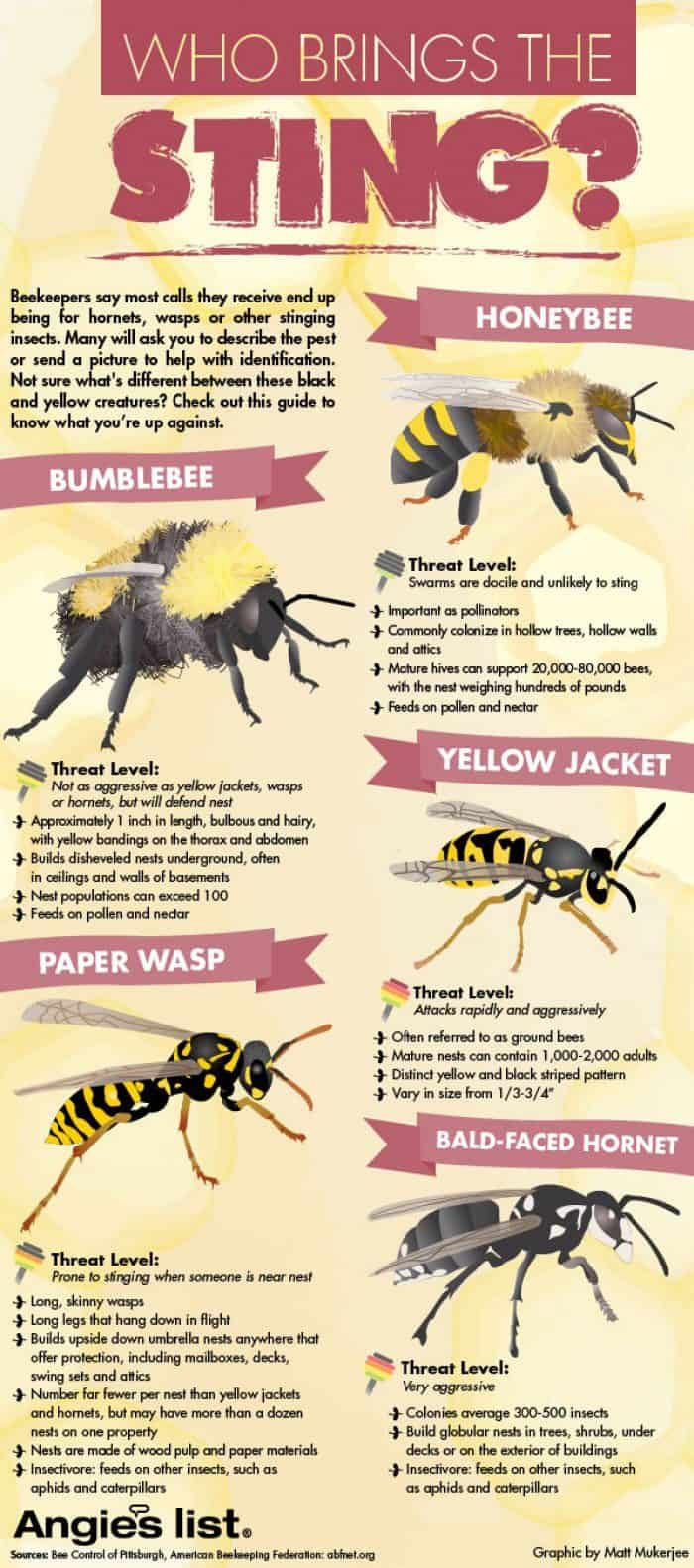 bees sting infographic describing types of bees hornets wasps