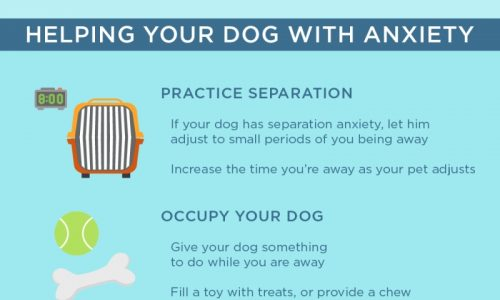 understanding-anxiety-in-your-dog-infographic1