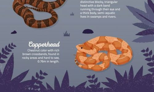 How To Survive A Deadly Snake Bite infographic