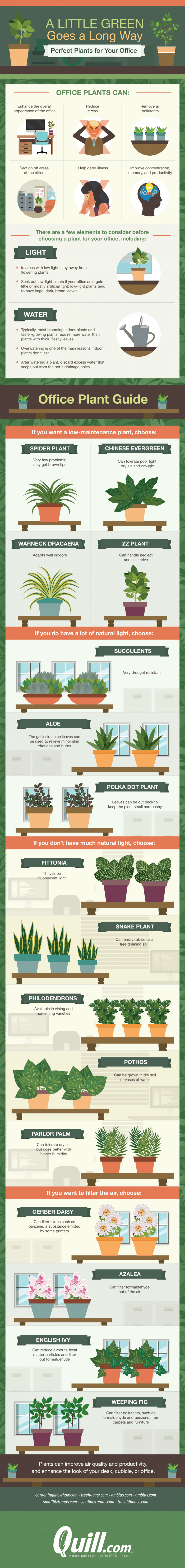 These Indoor Plants Will Spruce Up Any Office