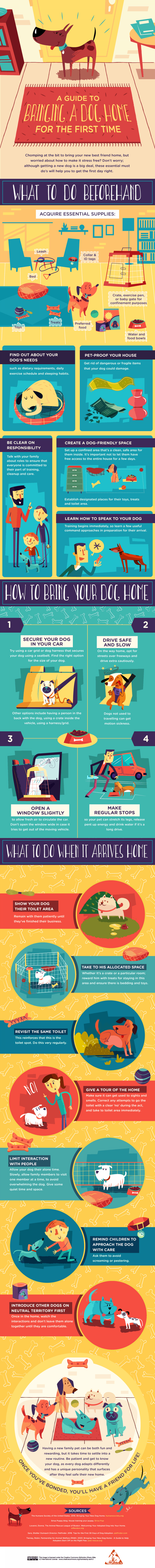 Infographic showing how to introduce your dog to their new home without causing any trauma