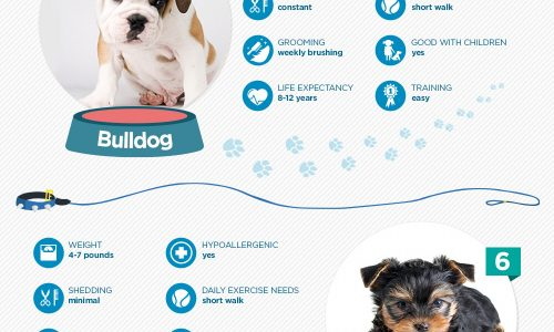 A Breakdown Of The Ten Most Popular Dog Breeds