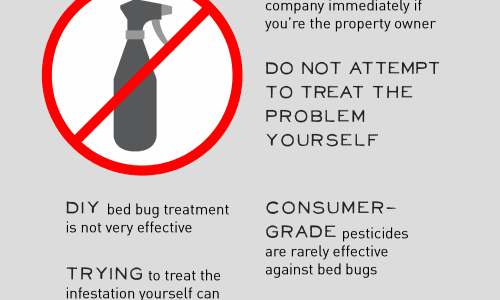 Five Steps To Take At The First Sign Of Bedbugs