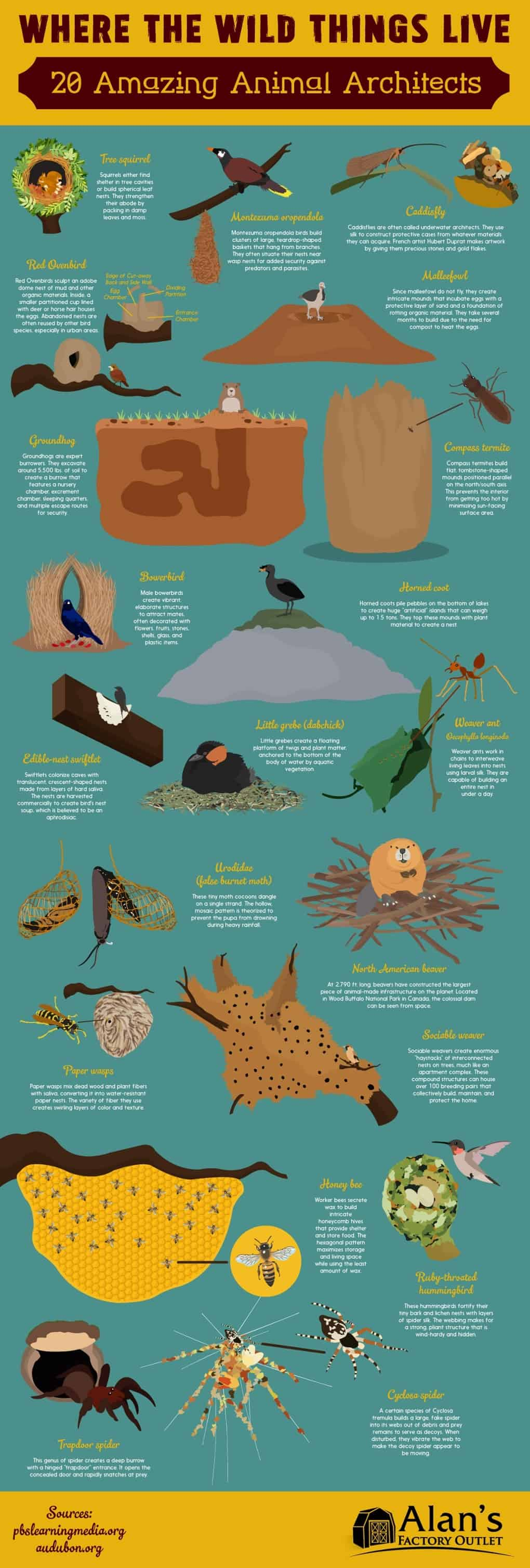 20 awesome animal habitats daily infographic