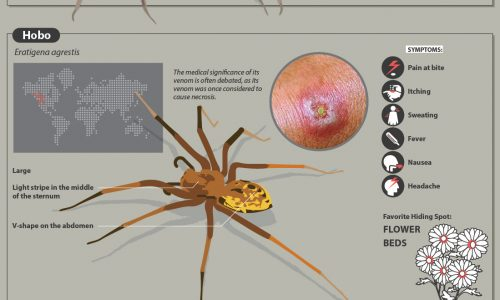 Venomous spiders around the world