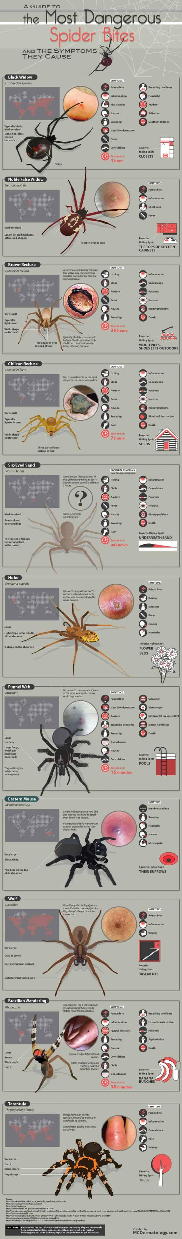 Venomous spiders around the world