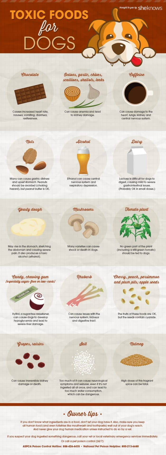 infographic listing 15 foods that are toxic for dogs