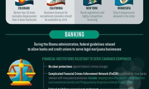 infographic about cannabis and marijuana legalization