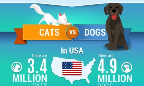 infographic describes How to Help Animal Shelters, cost of pet shelters, why to volunteer at a shelter, and how many stray animals are in the U.S. and UK