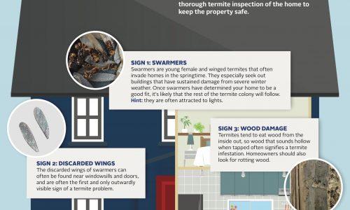 tiny-termite-infographic