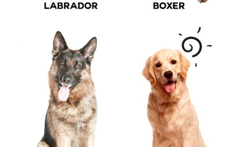 Pet Door Size Guide