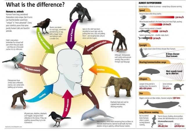 Humans vs. Animals Infographic