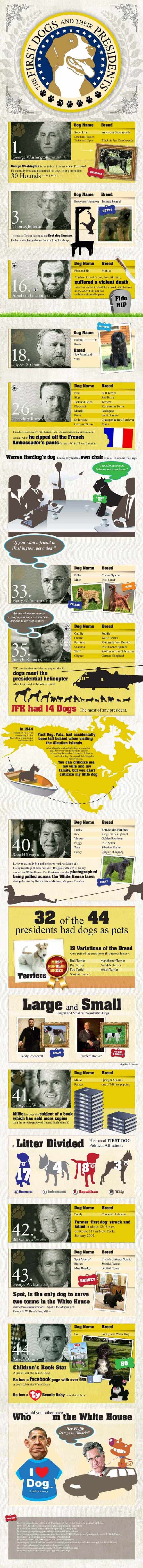 Dogs of the presidents Infographic