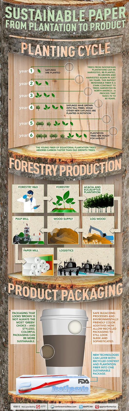Sustainable Paper from Plantation to Product Infographic