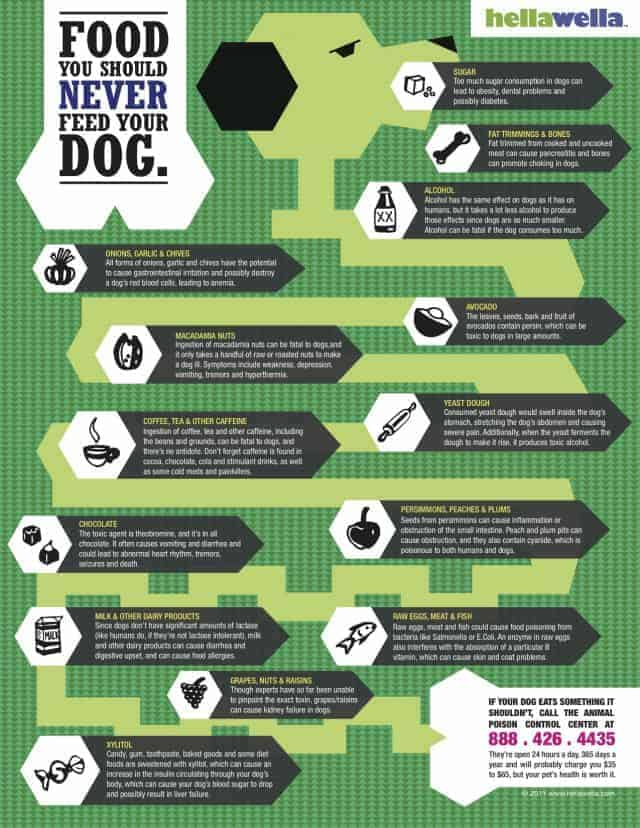 What not to feed your dog [Infographic