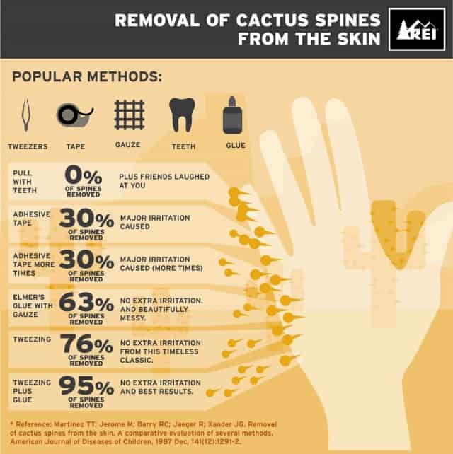 Removal Of Cactus Spines From The Skin