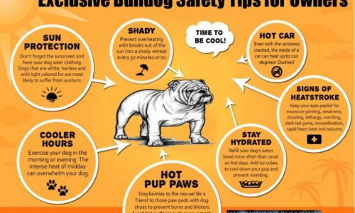 Exclusive Bulldog Safety Tips for Owners
