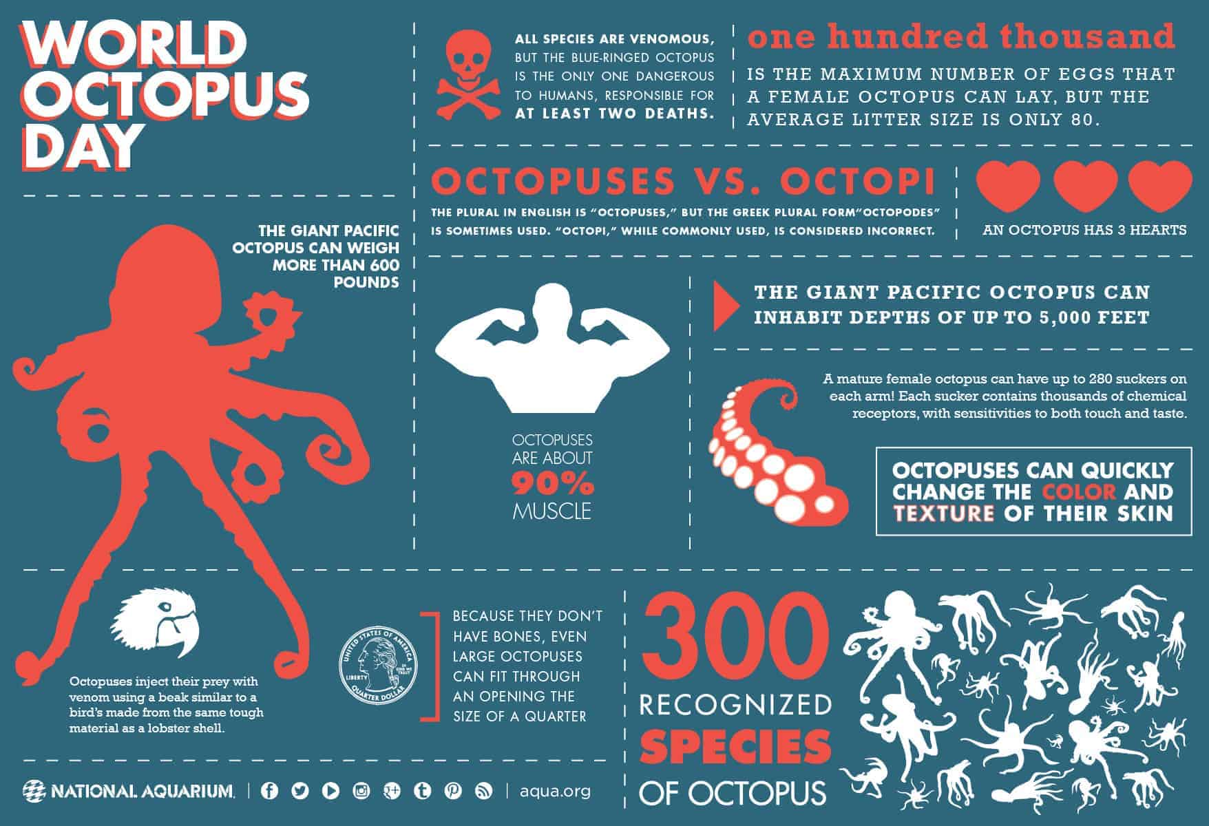 world octopus day daily infographic. Black Bedroom Furniture Sets. Home Design Ideas