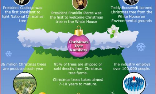 Which President Banned Christmas Trees From The White House.Christmas Tree Facts Daily Infographic