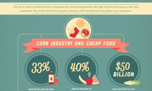 Shocking Facts about the American Corn Industry Infographic