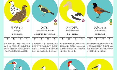 Japan birds infographic