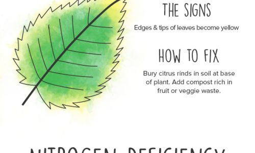Plants guide infographic