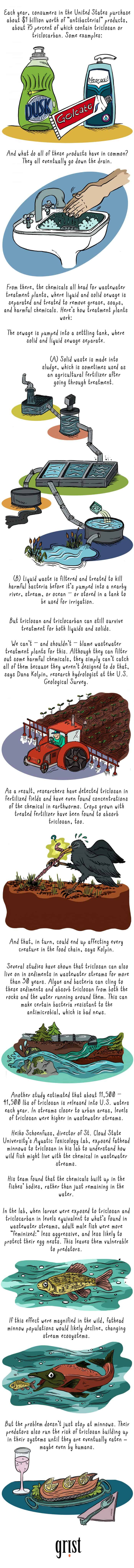 Antibacterial Soap Affects Infographic