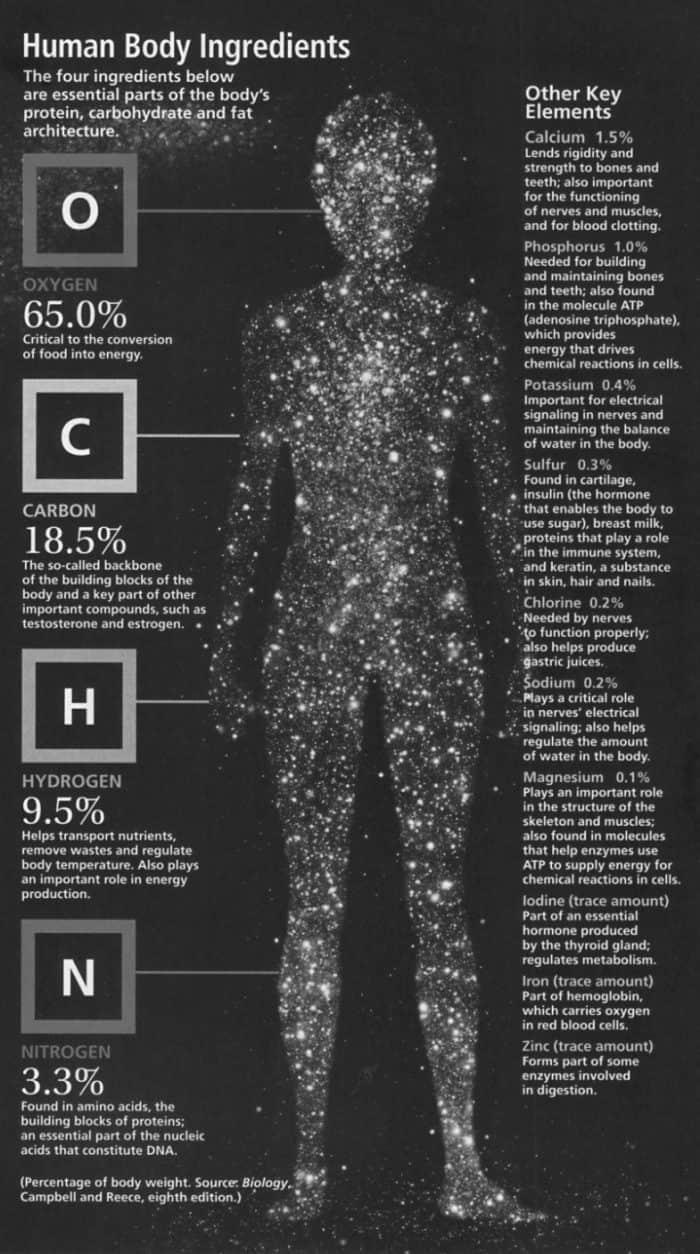 Human Body Ingredients Infographic