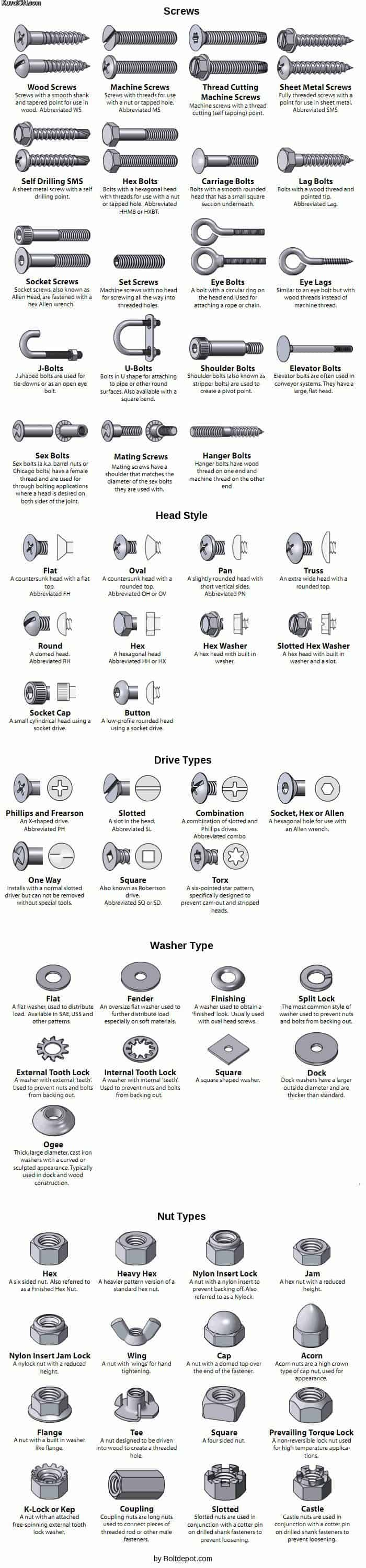Types of Screws and Bolts Guide Infographic
