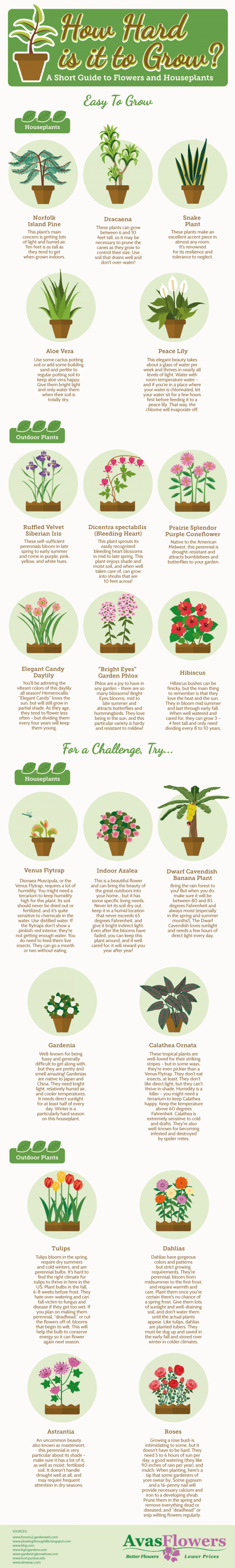 Your Guide to Growing Flowers and Houseplants Infographic